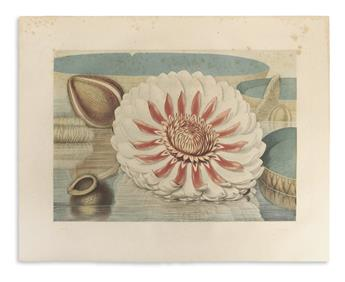 SHARP, WILLIAM. Victoria Regia; or the Great Water Lily of America.