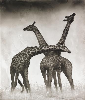 NICK BRANDT (1964- ) Giraffe Triptych, Maasai Mara.