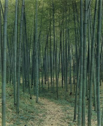 ELIOT-PORTER-(1901-1990)-Bamboo-forest-China--Scene-in-China