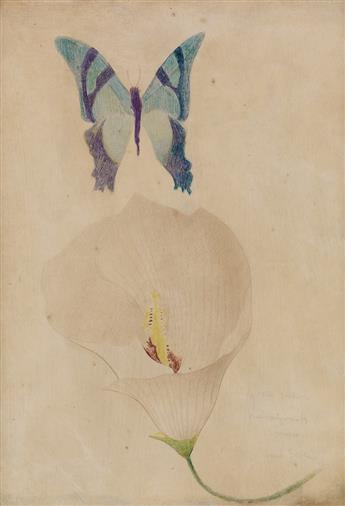JOSEPH STELLA Study of a Blue Butterfly and White Calla Lily.