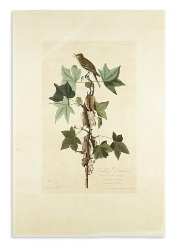 AUDUBON, JOHN JAMES. Traills Fly-Catcher. Plate 45.