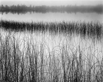 WESTON, BRETT (1911-1993) Reeds in pond.