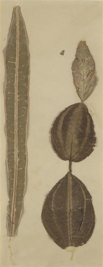 JOSEPH STELLA Four Leaves.