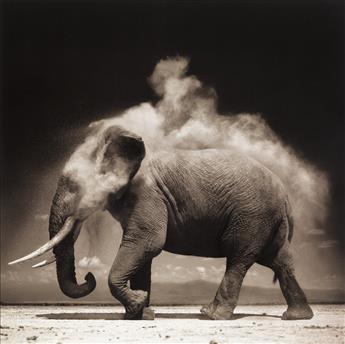 NICK BRANDT (1966- ) Elephant with Exploding Dust, Amboseli.