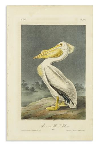 AUDUBON, JOHN JAMES. American White Pelican. Plate 422 * Brown Pelican. Plate 423.