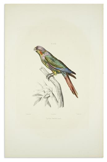 (BIRDS.) Blanchard, Emile. Group of 3 hand-colored lithographed plates of parakeets,