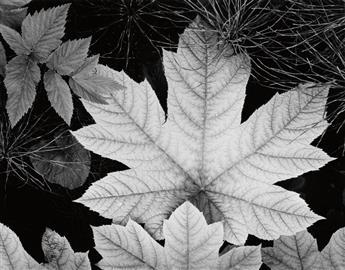 ADAMS, ANSEL (1902-1984) Leaf, Glacier Bay National Monument, Alaska.
