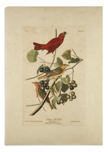 AUDUBON, JOHN JAMES. Summer Red Bird. Plate XLIV.