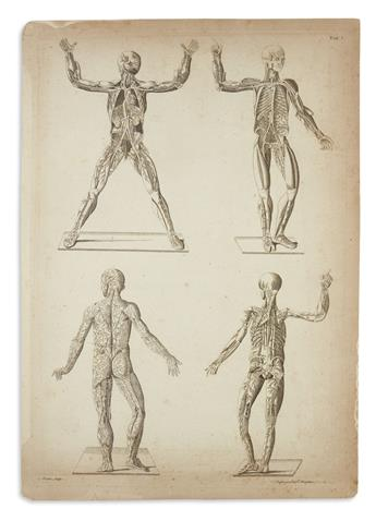 (ANATOMY.) Albinus, Bernhard Siegfried. Collection of 24 large folio engraved plates