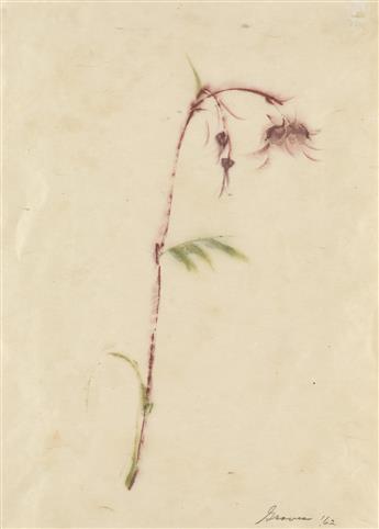 MORRIS GRAVES Wildflower.