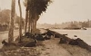 STIEGLITZ, ALFRED (1864-1946) A Decorative Panel [Goats Along the Seine] * Goats Along the Seine.