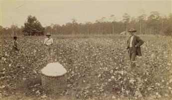 (AFRICAN AMERICANA) Pair of young women cotton pickers in Georgia, with a male supervisor at right * Picking cotton, Jackson, Tennessee