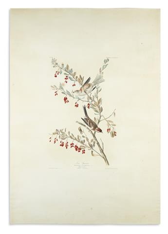 AUDUBON, JOHN JAMES. Tree Sparrow. Plate CLXXXVIII.