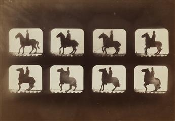 EADWEARD MUYBRIDGE (1830-1904) Horse and rider motion study (composite).