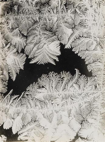 WILSON A. BENTLEY (1865-1931) Group of 5 photographs of frost.