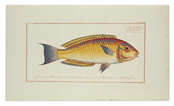 (FISH.) Bloch, Marcus Elieser. Group of 4 hand-colored engraved plates,