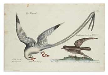 (BIRDS.) Seligmann, Johann Michael. Group of 6 hand-colored engraved plates after Mark Catesby or George Edwards,