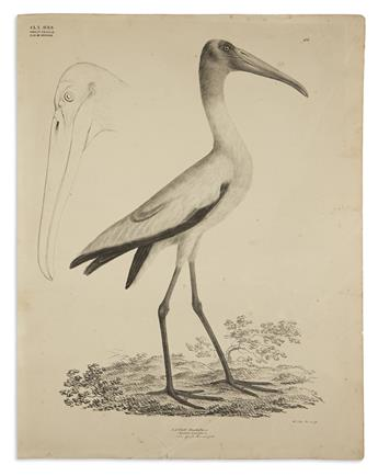 (BIRDS) Goldfuss, Georg August. Group of 6 lithographed plates of cranes, storks and waterbirds,