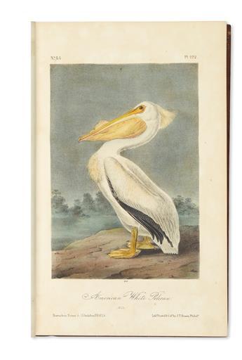 AUDUBON, JOHN JAMES. The Birds of America.
