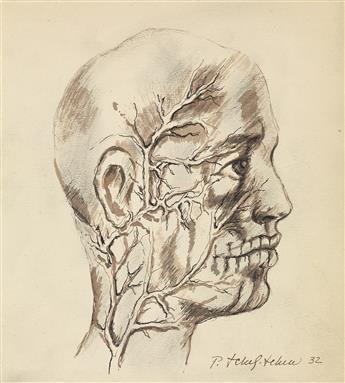 PAVEL TCHELITCHEW Anatomical Head Study.