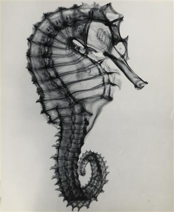 (X-RAYS) A series of 7 x-rays featuring studies of small animals and shells.