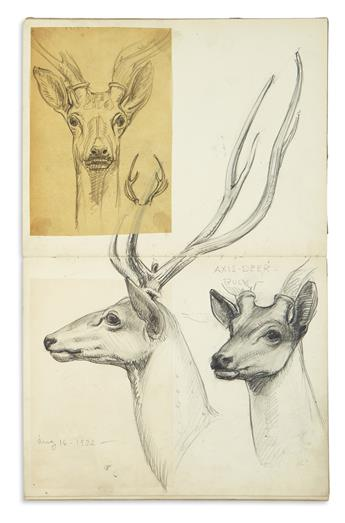 (SKETCHBOOK.) Hafner, Charles Andrew. Album of natural history sketches.