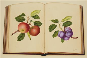 PRASAD, JAGGU. Trompe loeil illustration of an open pomology album.