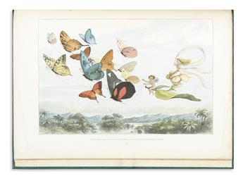 (CHILDRENS LITERATURE.) DOYLE, RICHARD. In Fairyland. A Series of Pictures from the Elf-World.