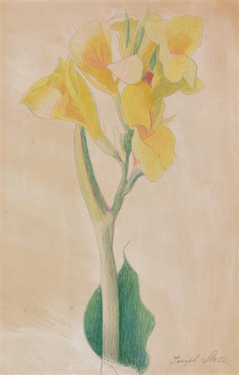 JOSEPH STELLA Yellow Alstroemeria.