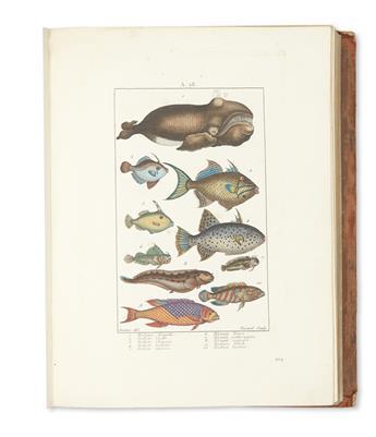 (NATURAL HISTORY.) Atlas des Figures Coloriees du Nouveau Dictionnaire dHistoire Naturelle.
