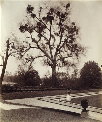 EUGÈNE ATGET (1857-1927) Arbre avec Gui [Tree with Mistletoe].