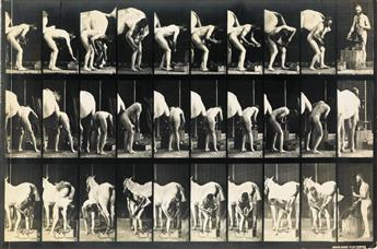 EADWEARD MUYBRIDGE (1830-1904) Shoeing a horse, plate 508 from Animal Locomotion (reversed).