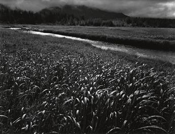 ADAMS, ANSEL (1902-1984) Rain, Beartrack Cove, Glacier Bay National Monument, Alaska.