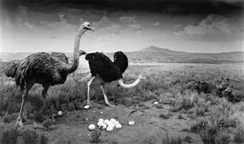HIROSHI SUGIMOTO (1948- ) Ostrich - Wart Hog.