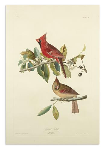 AUDUBON, JOHN JAMES. Cardinal Grosbeak. Plate CLIX.