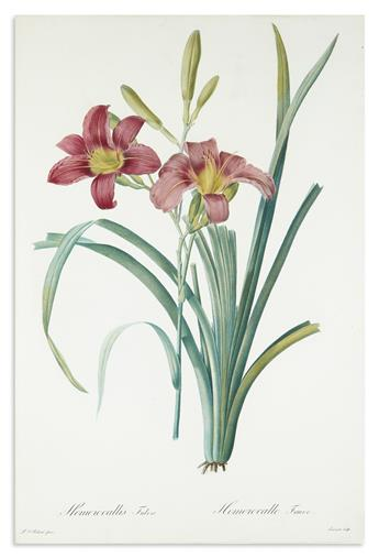 REDOUTÉ, PIERRE-JOSEPH. Hemerocallis Fulva / Hemerocalle Fauve. [Plate 16]. [Orange Day Lily].