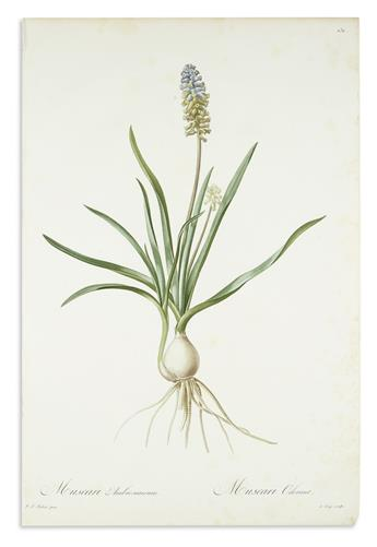REDOUTÉ, PIERRE-JOSEPH. Three hand-finished color-printed stipple engravings