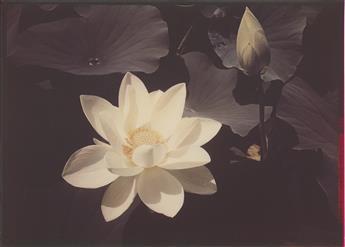 EDWARD STEICHEN (1879-1973) White Lotus.