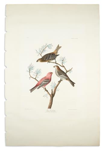 AUDUBON, JOHN JAMES. Pine Grosbeak. Plate CCCLVIII.