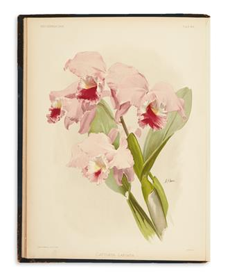 (ORCHIDS.) Sander, Frederick. Reichenbachia. Orchids Illustrated and Described.