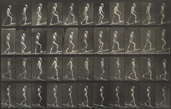 EADWEARD MUYBRIDGE (1830-1904) A selection of 60 plates from Animal Locomotion.