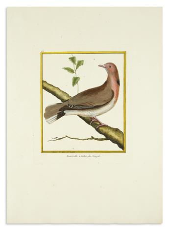(BIRDS.) Martinet, Francois Nicolas (engraver). Group of 21 engraved plates on large folio paper with original hand-coloring,