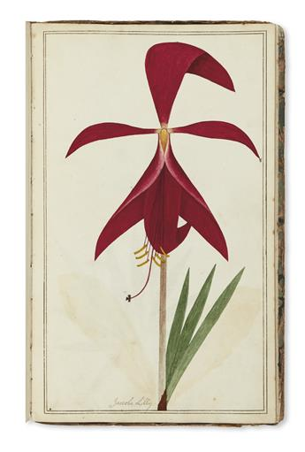 (BOTANICAL.) English School. Eighteenth-century botanical watercolors.