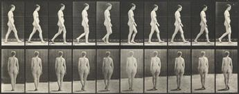 EADWEARD MUYBRIDGE (1830-1904) Woman walking, plate 40 from Animal Locomotion.
