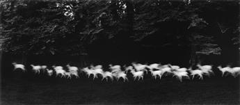 PAUL CAPONIGRO (1932- ) Running White Deer, County Wicklow, Ireland.