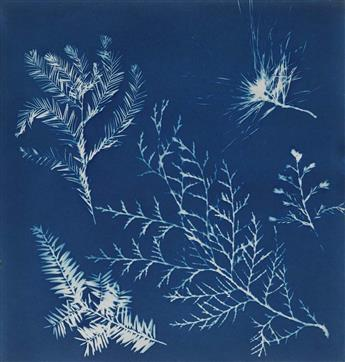 (CYANOTYPE) Handmade album containing 19 beautiful botanical photograms, each printed in cyanotype, that was apparently created by Flor